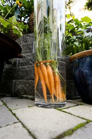 Morötter i en vas blir en vacker och hållbar höstdekoration.
