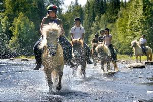 Många älskar att komma ut i naturen på hästryggen. Hästar saknas inte, men förmågan att skapa tillväxt kring dem kunde bli bättre.