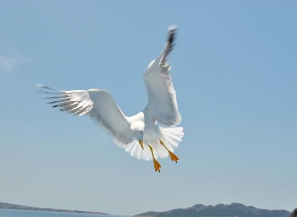Tagen på en båt i grekland när fågeln dök efter bröd