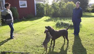Helen Dahlgren och veterinär Inger Jansson tillsammans med sina hundar. Brukshunden labradoren Duff är kastrerad och borderterriertiken Ella ska kastreras när hon haft sin andra kull med valpar.
