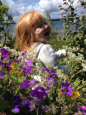 En sommarbild på Elsa två år som plockar blommor till midsommarstången.