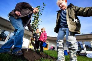 Barn- och utbildningsnämndens ordförande, Björn Sandal (S), planterade ett äppelträd på Skogsgårdens                        förskola i Torvalla i går. Han fick god hjälp av Axel Lindgren Magnusson. Foto: Håkan Luthman