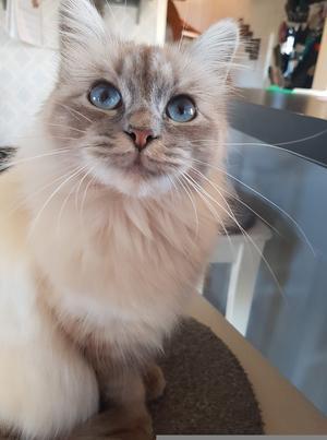 168) Detta är Alice som är en äkta livsnjutare! Hon är där vi är och trivs bara hon får vara nära Foto: Betty Sporrong