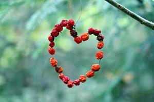 Ett hjärta av rönnbär.