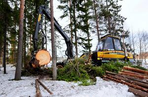 Vi är stolta över att vi i Januariavtalet drivit igenom ett antal viktiga åtgärder som ska stärka äganderätten och rättssäkerheten i skogen, skriver Niklas Edén (C). Foto: Robert Granström/TT
