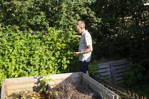 Göran Bergqvist plockar ihop några hallon i trädgården som avnjuts på direkten.
