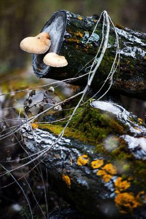 I förmultnande trädstammar bor och lever massor av svampar, lavar och insekter.