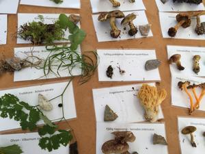 Länsstyrelsen visade vid invigningen upp exempel på växter som finns i naturreservatet.