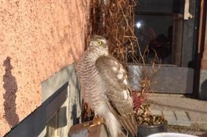 kl 07.50, på väg till tvättstugan.sitter denna fågeln o väntar på att bli fotad  ;)
