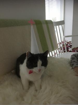 190) Majsan är världens goaste,mysigaste och barnvänligaste katt också gillar hon att klä ut sig. Foto: Lena Lundgren