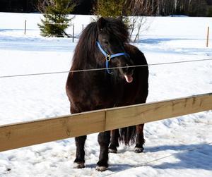 Var ute och fotade lite grann, gick förbi denna lilla ponny och fick denna snygga pose på bild.
