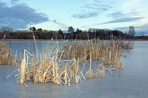 Det finns även en sjö i naturreservatet, som heter Stadssjön, trots att den ligger strax utanför stan.