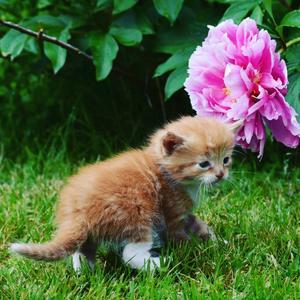 313) Världens sötaste kissemiss  Foto: Malin Jonsson