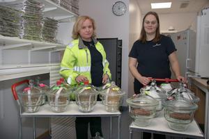 Siv Skoglund, chef för Miljö och processlabbet, och panelledaren Stephanie Holmqvist förbereder en ny smakprovning.