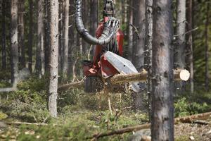 Skogsavverkning med en skogsskördare.
