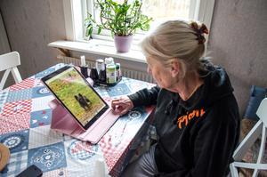 Kirsti Åberg tittar på bilder av sin hund och minns honom som snäll och intelligent.