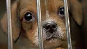Barn kan ha lika hjärtesmältande blickar som hundvalpar i bur.