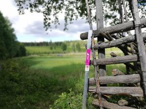 Över 60 000 checkpoints hittades och registrerades in under friskvårdsprojektet Hittaut Ovanåker 2020. Totalt fanns 120 stolpar utplacerade runt om i kommunen.