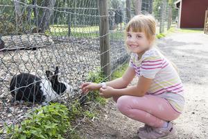 Amanda Bohm 6 år matar kaninerna.