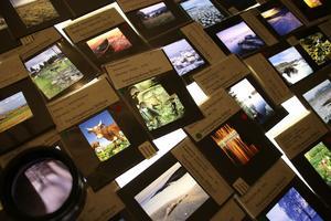 Ett helt bord med mindre bilder på djur och natur.