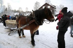 Barnen fick  hälsa på hästen.