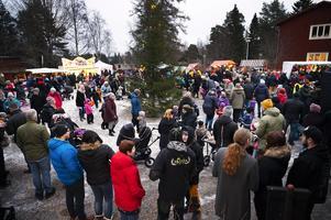 Dans kring granen under julmarknaden på Norra berget.