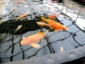 I dagarna har det blivit klart att en företagare i Ludvika tänker köpa JaHa och ta över fiskarna.