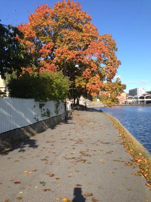 Helvi Lamsijärvi tycker att hösten är vacker vid Maren i Södertälje.