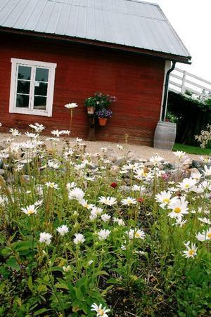 Det började med ett något annorlunda trädgårdsland. I dag är makarna Lindbäcks trädgård 6 000 kvadratmeter stor.