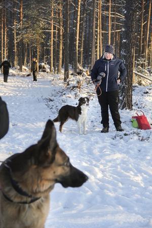I Ljusdals brukshundklubb finns många tillfällen att träna sina hundar, både på torsdagskvällar och ibland på helgerna. Annica Fredholm tog med sin hund Juni, en australian shepherd.