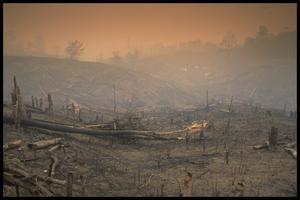 Skogsavverkning för att bereda plats för oljepalmer är ett av de största hoten mot Sumatras regnskogar. Foto L. Lily / Greenpeace