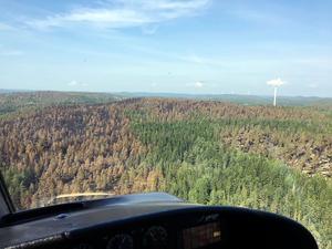 Från helikoptern syns det bruna området där branden har dragit fram över Myckelsjöberget. Foto: Johanna Engström.