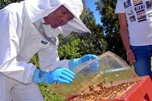 Ibrahim Mohamed visar upp bina som ska ta plats i den nya kupan.