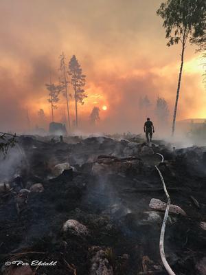 En ögonblicksbild från sommarens skogsbränder i Ljusdals kommun har prisats som årets reportagebild. Foto: Per Ekdahl