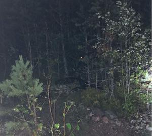 En cykel hade bland annat gömts i skogen längs en grusväg. Foto: Polisens förundersökning.