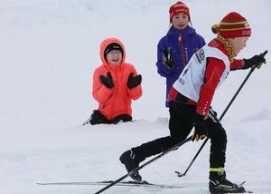 Ivrigt påhejad och med startnummer ett skidade Anton Helmersson, Svegs IK, snyggt runt skidstadion.