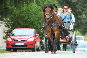 Hästen Lisen rider runt Kilafors under årets Bonden på byn.