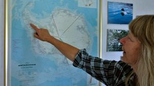 Milo pekar ut Antarktiska halvön. – Det är bara här som båtarna kan lägga till, säger hon.