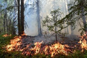 Branden i Norrmossaflon i Sollefteå är en av de större bränder räddningstjänsten bekämpat under den senaste veckan.