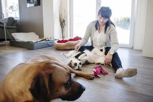 Familjens tidigare hund Simba och den nya hunden Moa kommer väldigt bra överens trots att de vid intervjun bara bott ihop i ungefär en och en halv vecka.