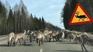 Renar på riks-90 igen – bilister varnas