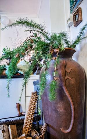 Lärkträd i en hög kruka vid spisen.
