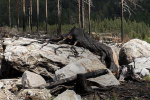 I flera månader kändes brandlukten i skogen berättar Kärstin Eriksson som upplevde branden inpå knuten.