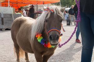 Hästen Holly var också uppklädd för att gå med i Pridetåget.