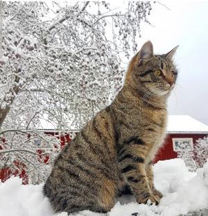 145) Min lilla Ida, i sitt livs första snö, december 2018. Foto: Emelie Rydfelt