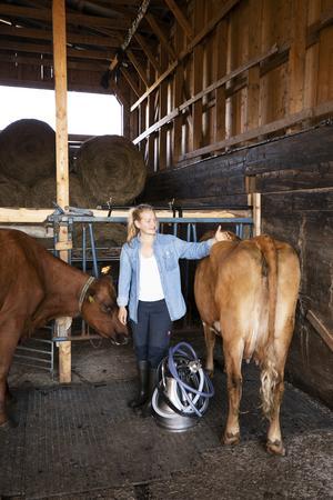 Agnes Sörensen började jobba på en mjölkgård i Nya Zeeland för sju år sedan. När hon kom tillbaka till Sverige sökte hon sig till Fjällbetes verksamhet och är i dag ansvarig för tio mjölkkor och tre, snart fyra, kalvar.