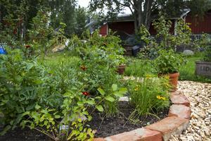 Kryddlandet har fått en egen liten plats i centrum av odlingsträdgården.