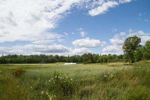De nya bostäderna är tänkta att byggas vid åkerkanten på skogsmark.