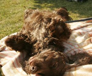 Vi var hundvakter åt Cockerspanieln Brono över helgen och både vi och han njöt av det fina vädret.