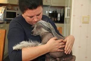 Janne är en mycket tillgiven kinesisk nakenhund som nu har fått ett tillfälligt hem hos Linda Malmgren som har stor erfarenhet av hundar och särskilt av nakenhundar.